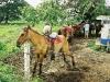 068-paard-zeikend