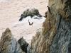 096-acapulco-springen